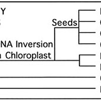 Fossils Alive Plant phylogeny diagram by Don Garlick.