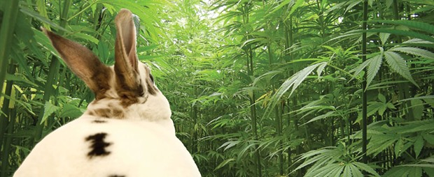 weed-bunny-magnum.jpg