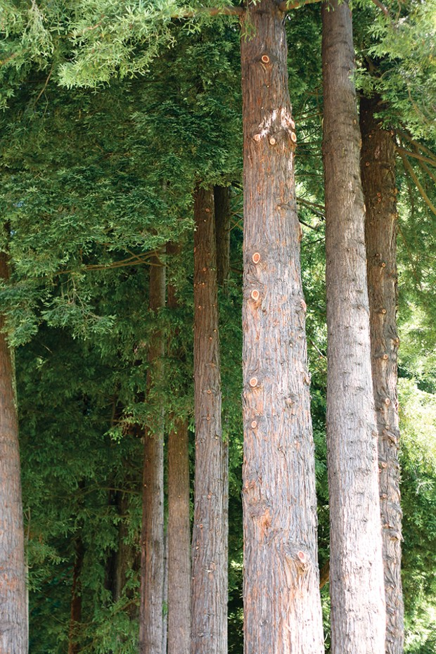 Redwood Park - PHOTO BY BOB DORAN