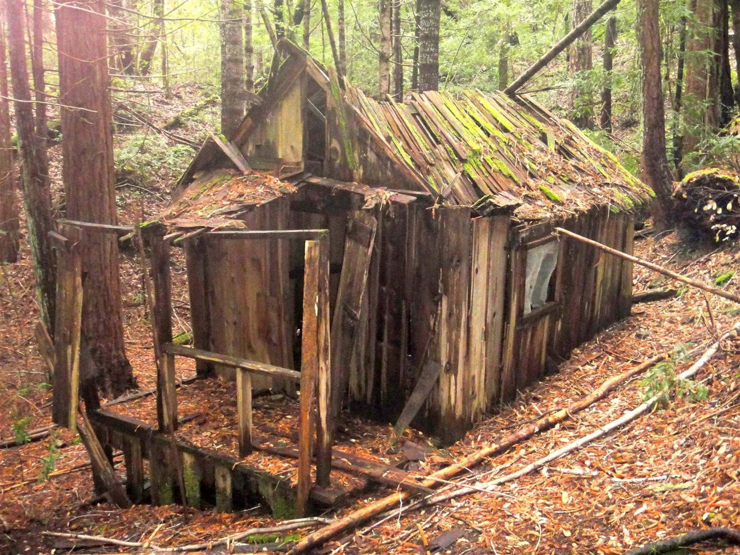 Remains of cabin at Johnson Camp - PHOTO BY BARRY EVANS
