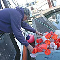 People of the Crab Ron Kemp, who owns the 'Ossian,' helps offload bait boxes from the Maria Isabel to make room for more crab traps.