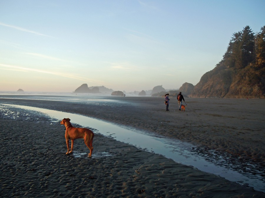 Rusty the Ridgeback admires the sunset at Moonstone Beach. - PHOTO BY KEN MALCOMSON