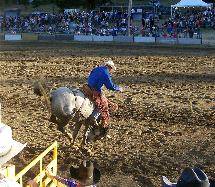 Saddle bronc busts out - PHOTO COURTESY OF GARBERVILLE RODEO