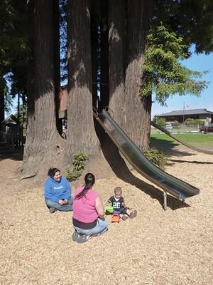 Sequoia Park playground - PHOTO BY SCOTTIE LEE MEYERS