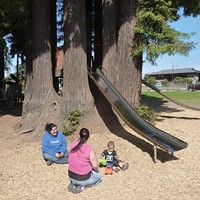 Sequoia Park playground