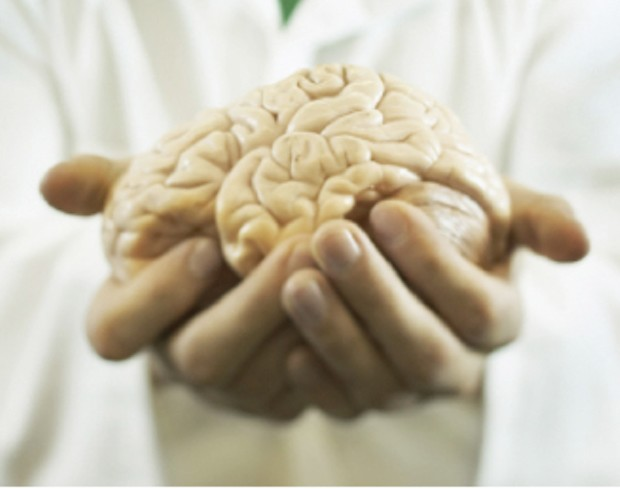 Standard issue human brain. Swapping out each of its 100 billion neurons at one per second would take 3,000 years. - THINKSTOCK