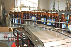 PHOTO BY ANDREW GOFF - Steelhead heads on down the line in Mad River Brewery's Blue Lake facility.