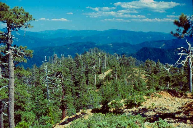 Atop Horse Mountain. - PHOTO COURTESY SIX RIVERS NATIONAL FOREST