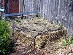 Straw bale garden.  Photo by Amy Stewart