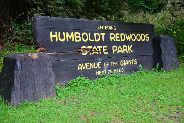 Humboldt Redwoods State Park. - WES SCHRECONGOST