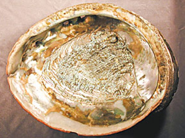 The prized red abalone. usgs.gov photograph by David Lindberg.