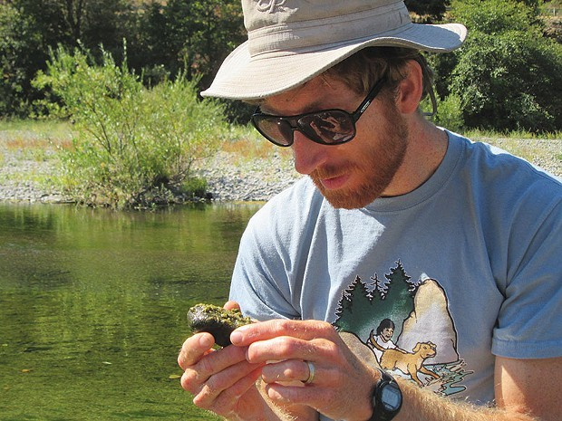Keith Bouma-Gregson is one of many scientists and citizen scientists trying to learn more about toxic blue-green algae. Here he examines an algae-coated rock at the south fork of the Eel River. - PHOTO BY JACOB SHAFER