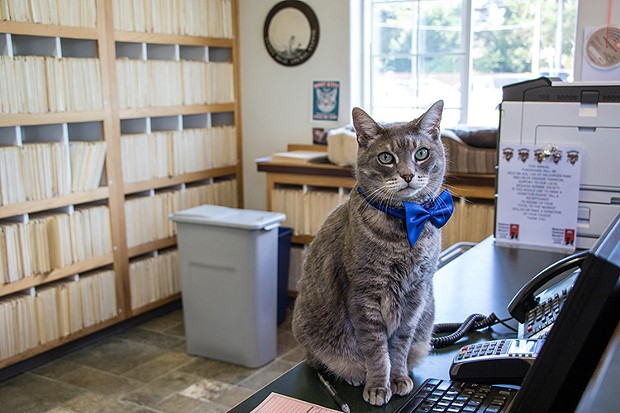 The cat's meow: Sunny Brae Animal Clinic won Best Veterinarian. - PHOTO BY JILLIAN BUTOLPH