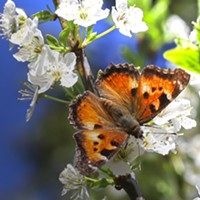 HumBug: Partial Sun, Chance of Butterflies and Bees