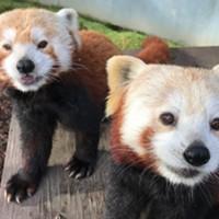 Sequoia Park Zoo Foundation Fundraiser Zootini Going Virtual