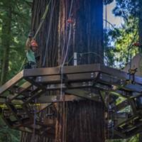 Look Up: Redwood Skywalk in Progress