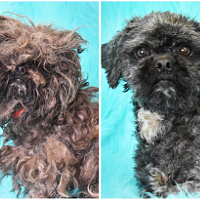 Sequoia Humane Society Rescue Pup Among Top 10 Shelter Dog Makeovers