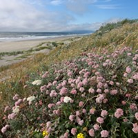Lanphere Dunes and Ma-le'l Dunes Named National Natural Landmarks