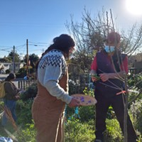 A Sanctuary Garden