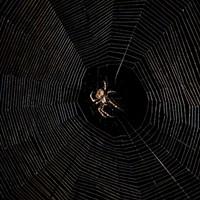 HumBug: Tangled Webs