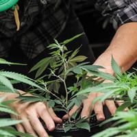 Mendo Growers Push Initiative