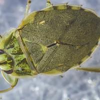 Little Bugs, Little Biters