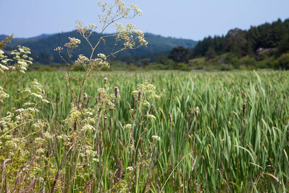 Hookton Slough flora. - AMY KUMLER