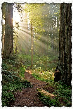 Get out and see the redwoods. - FILE