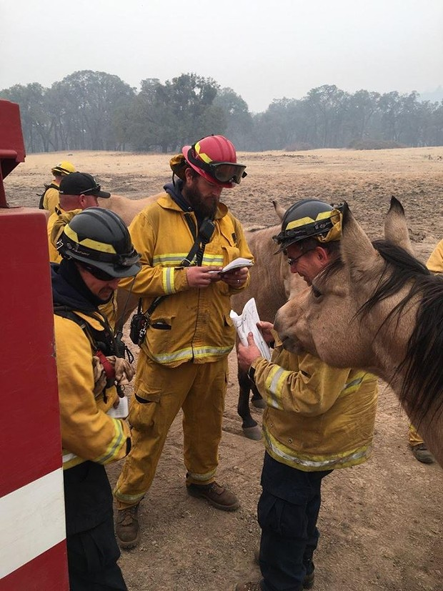 """Trinity County's Weaverville Fire Department posted this and said, """"Strike Team 3275c members briefing the locals on today's operations. There will be no horsing around."""" - WEAVERVILLE FIRE"""