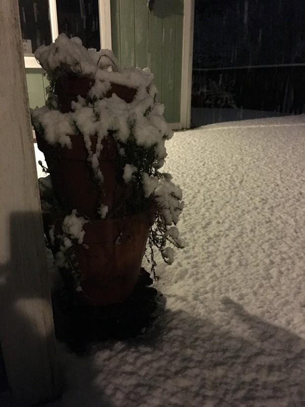 McKinleyville with a fresh blanket of powdery snow around midnight Feb. 9. - THADEUS GREENSON