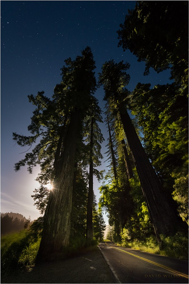 Guardians of the Night. The full moon rises behind towering redwoods standing watch on the Avenue of the Giants in the Eel River valley. It was 11:30 p.m. A breeze played among the branches and grasses beside the road. Sunlight? Nope! The only light on the landscape was that of the moon, made bright from a long exposure in this photograph. Humboldt County, California. - DAVID WILSON