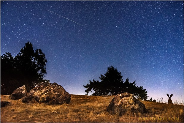An uncropped view, this is also a composite of two photographs. The camera was set to take photos at regular intervals and made over 500 exposures from here. The large meteor above crossed the sky where you see it, but after the rabbit had left. The smaller meteor flashed in the sky as the rabbit watched. - DAVID WILSON