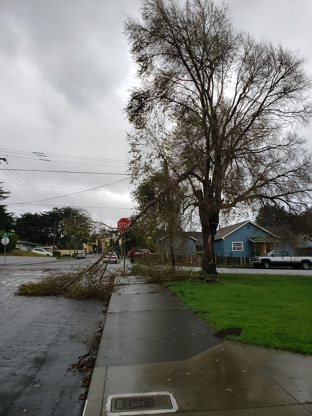 A branch broken off a tree as a result of the storm. - KALI COZYRIS