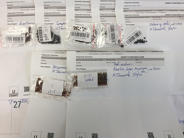 At the USDA  National Identification Service' Lab in Beltsville, Maryland, Animal and Plant Health Inspection Service Plant Protection and Quarantine botanists analyze and catalog seed samples received, unsolicited, from overseas. - USDA