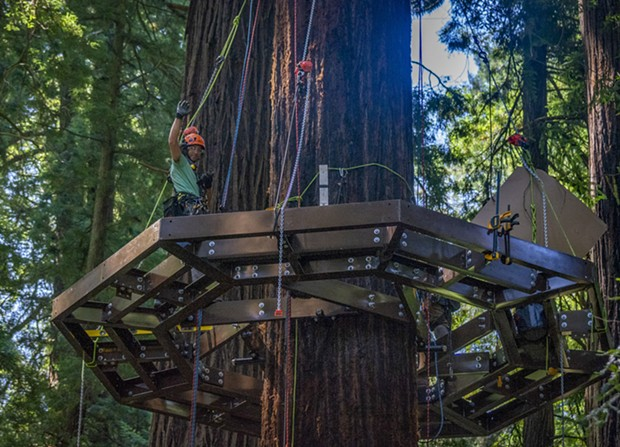 One of the Synergo aerial construction employees paused to wave at walkers on the trail below while installing one of  several Redwood Sky Walk platforms that encircle redwood trees. - PHOTO BY MARK LARSON