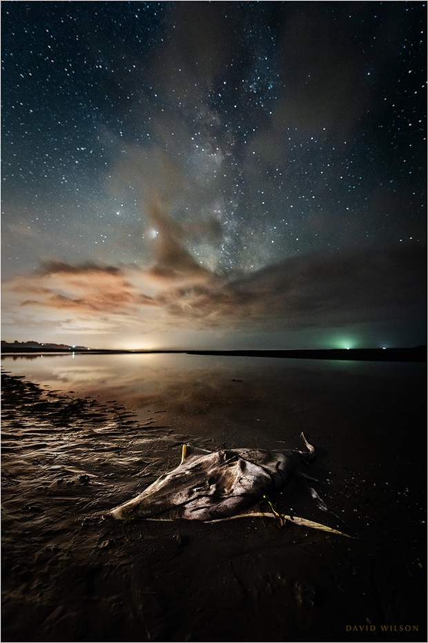 The lifeless ray lay on the shore with its tail still in the water. Above, the Milky Way, with Jupiter and Saturn, marked its passage in a night-long vigil. - PHOTO BY DAVID WILSON