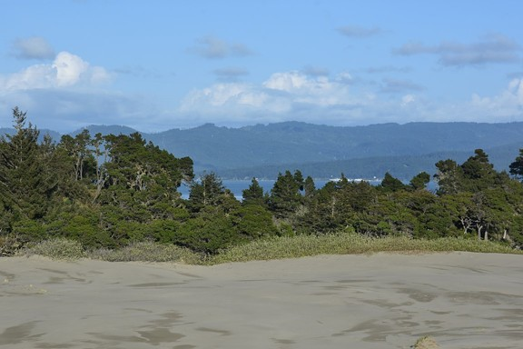The Samoa Dunes on the Dog Ranch property. - ANDREA PICKART