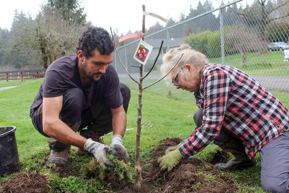 Volunteers with Cooperation Humboldt plant fruit trees in Eureka as a part of a program to plant dozens of fruit trees throughout the city. - SUBMITTED