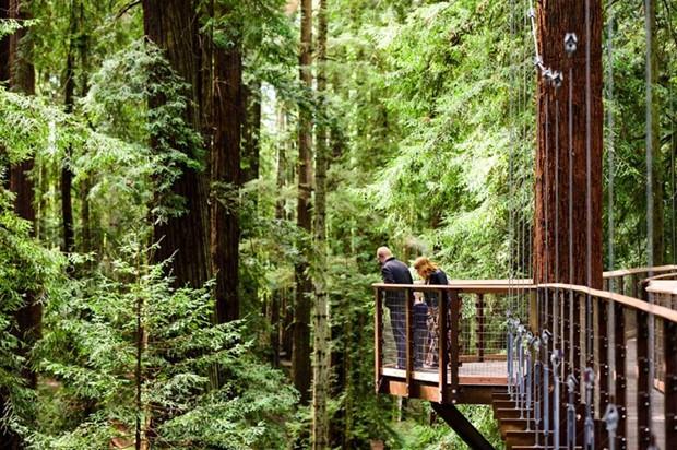 A platform on the Redwood Sky Walk. - EDDY ALEXANDER ON BEHALF OF THE CITY OF EUREKA