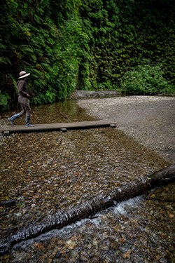 Walking up the small creek in Fern Canyon when seasonal bridges were available. - PHOTO BY MARK LARSON