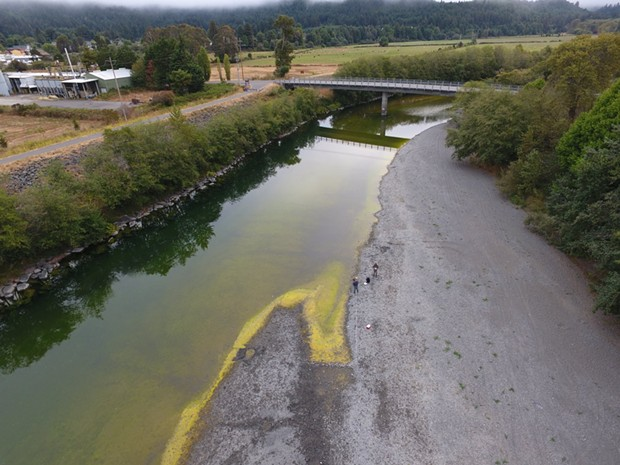 Cyanobacteria, also known as blue-green algae, was confirmed in samples taken on the Mad River last year by Blue Lake Rancheria scientists. Cyanobacteria is considered harmful to people and pets and should be avoided. - PHOTOS SUBMITTED BY BLUE LAKE RANCHERIA.