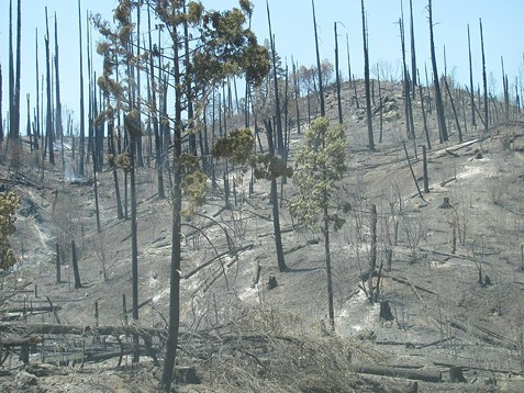 Damage from the Saddle Fire. - SUBMITTED