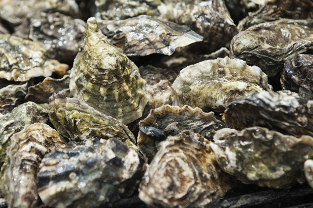 Kumamoto oysters cook on a grill. - MARK MCKENNA
