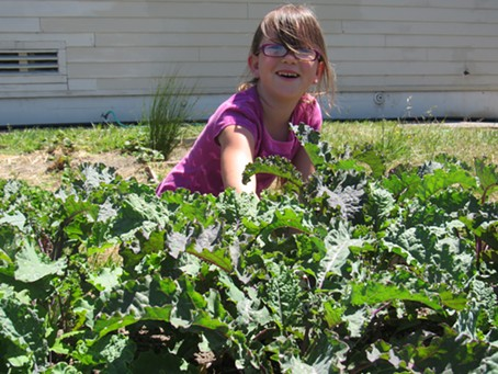 Erin Rose Davis plucks a weed from the kale patch. - LINDA STANSBERRY