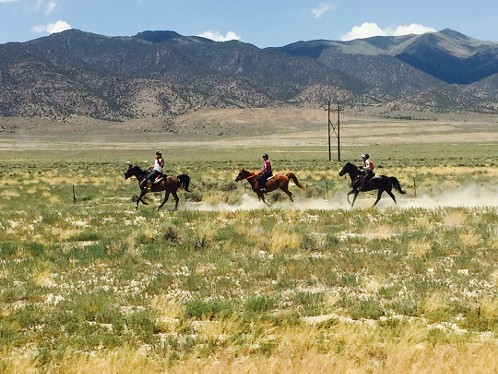 Riders kick up some dust in Nevada. - CHRIS LANGE