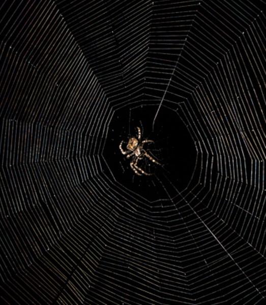 A cross orbweaver, busy descendant of Arachne.
