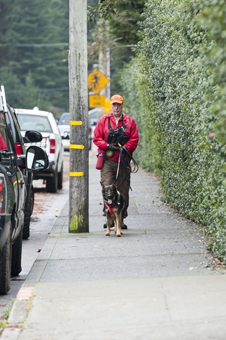 A search dog named Elsi was brought in to try and find a scent trail of the missing red panda Masala. According to her handler, conditions were fairly good for the wilderness trailing trained dog to follow a scent trail. - MARK MCKENNA