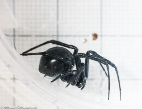 A female against a 1-centimeter/1-millimeter grid. - ANTHONY WESTKAMPER
