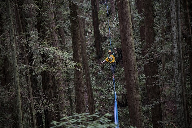 Joey Croft walking in the middle of the midline that measured to be 400 feet in the Arcata Community Forest. - SAM ARMANINO