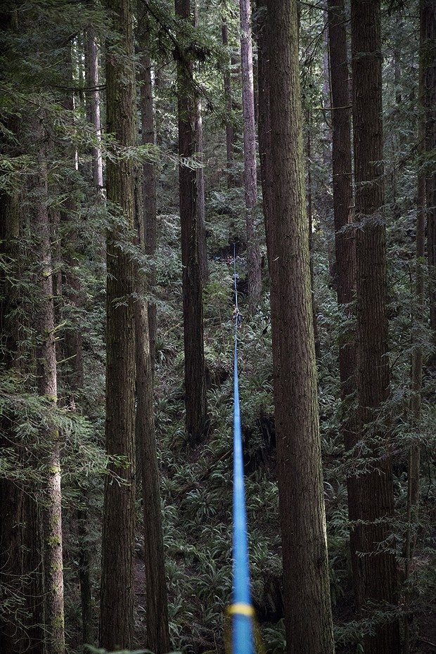 The line stretched across the forest is almost exactly 400 feet long. - SAM ARMANINO
